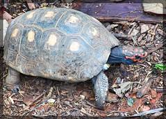 Image52 (Daniel.N.Jr) Tags: animal selvagem zoologico kodakz990