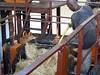 047 (alexandre.vingtier) Tags: haiti rum caphaitien nazon clairin rhumagricole distillerielarue
