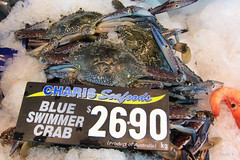 Blue Swimmers (Jocey K) Tags: ice sign words labrador display notice australia queensland seafood crabs fishmarket goldcoast blueswimmercrabs