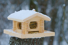 (Sasha Tivanov) Tags: winter stilllife snow garden diy gardening object birdfeeder 85mm objects birdtable af nikkor f18 18 horticulture doityourself       af85mm18  diydoityourself   trayfeeder