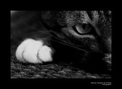 Cat (Marcos Teixeira de Freitas) Tags: brazil bw animal closeup brasil cat canon pb 100mm gata 50d marcosteixeiradefreitas