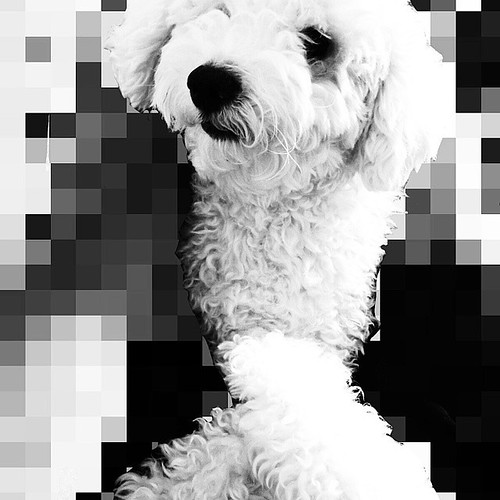 #cute #love #instadog #dog #mydog #petstagram #beautiful #igers #dogs #pomeranian #instadaily #tbt #dogsofinstagram #dogoftheday #instagood #dogstagram #follow #fashion #instamood #summer #mypet #pup #instalike #swag #pet #family #ilovemydog #followme #be