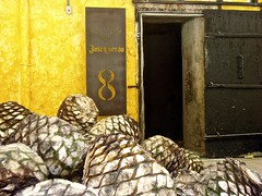 Tequila, Casa Cuervo GDL Jalisco (Arturo Rodriguez Rodriguez) Tags: tequila josecuervo