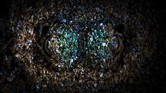 PA121914 (Jeannot Kuenzel) Tags: jeannotkuenzel jeannot kuenzel wwwjk4unet jk4u malta scuba under water underwater diving photography macro supermacro olympus epl5 zen port leica dg macroelmarit 45mm f28 asph ois inon z240 240z ucl165 s2000 moods aliensofthesea aliensofthedeepblue alien deep blue mediterranean sea maltaunderwater maltaunderwatermacro maltaunderwaterphotography bestmaltaunderwaterpictures maltamacro underwaterphotography maltascubadiving supermacrophotography underwatersupermacro underwateralien underwaterworld underwatercreature underwatermacro extrememacro superextrememacro