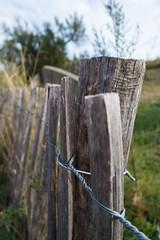 Dnenzaun /dune fence (patrik.haenggi) Tags: zaun dne dune fence