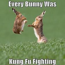 Bunny Rabbit Kung FU! (LoansByErick.com) Tags: funny pics animals fun facebook lol 2016 bunny squirel