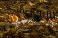 sous le tilleul (Therebentine tres occupe) Tags: automne feuillesmortes rateau jaune tilleul