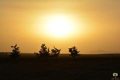 Coucher de soleil sur la wilaya de An Temouchent (Ath Salem) Tags:      algrie algeria an temouchent tourisme dcouverte    coucher de soleil sunset orange paysage landscape golden hour magnifique hammam bouhadjar ain arbaa hassi ghella   nikon d5200 nikkor 55200mm