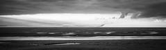 Last light flying (cottagearts123) Tags: birds black white murmuration wildlife knots infrared snettisham blackwhite