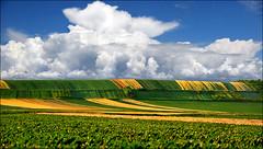 Spring field (Katarina 2353) Tags: landscape katarina2353 katarinastefanovic