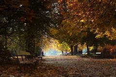Parallel to the Avenue (4eye) Tags: 4eye warsaw warszawa polska poland ujazdwpark