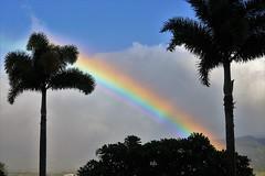 Rainbow between palm trees (joybidge (0n vacation)) Tags: trishcanada naturepatternscanada mauihawaii palmtrees rainbow