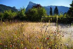 Avec la rose du matin (Excalibur67) Tags: nikon d750 sigma 24105f4dgoshsma paysage landscape mountain montagne fleurs flowers alpes