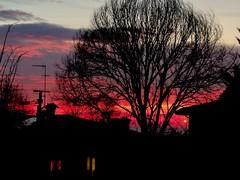 A flaming sunset tonight (vittorio vida) Tags: sunset sun night red flaming sky clouds windows tree dark