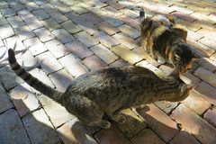 Key West (Florida) Trip 2016 2397Ri 4x6 (edgarandron - Busy!) Tags: coco callie cat cats kitty kitties cute feline florida keys floridakeys keywest