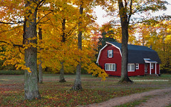 Awesome Autumn! (peddhapati) Tags: munising unitedstates mi barn red fall autumn colors 2016 trees scenic bhaskarpeddhapati nikond90 beautiful colorful nikkor yellows reds catchy