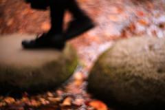 東京の秋 2016年 04 (sunuq) Tags: ペッツバール ロモグラフィ lomography zenit petzval japan 日本 canon eos 5dsr bokeh ボケ tokyo 東京 小石川後楽園 文京区 紅葉 plant tree