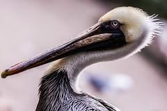 15 (photocat001) Tags: flamingogardens botanicalgardens animals wildlife nature parks recreation interesting