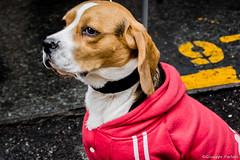 Curious dog (makizekai16) Tags: dog pet animals curious street chum greatshotss cane animaledomestico animale