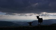 coucou (kayaspic) Tags: animal goat clouds sunrays sky mountains landscapes bluesky cloudscapes wild nature france frenchriviera exterieur outdoors ciel perspective freedom horizon sunnyday