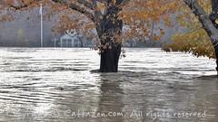 Torino (37) (cattazen.com) Tags: alluvione torino po esondazione parcodelvalentino murazzi pienadelpo cittditorino turin piemonte