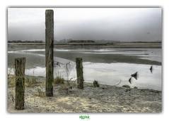 NATUURRESERVAAT HET ZWIN (rgisa) Tags: natuur reservaat nederland paysbas zwin dune rserve naturelle natural