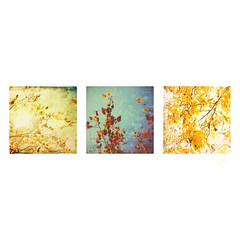 colorful branches (jeanne.marie.) Tags: branches trees colorful turquoise aqua yellow texture leaves triptych fall autumn iphoneography iphone7plus