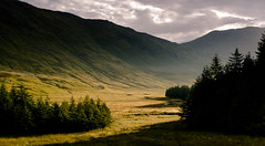 Shadow & Light (Nierenhirsch) Tags: shadow lighting tree glen knoydart mountains highlands forest landscape lovelandscape landscapephotographer hiking trekking scotland scotspirit lovescotland greatbritain beauty outdoorf outdoor berg heiter abhang vorgebirge landschaft hügel wälder berge himmel gras