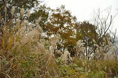 Looking up (kzmiz) Tags: nikond800e japan saitama hikigun namegawamachi yamada musashi shinrin koen park