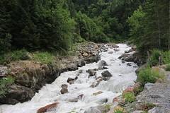 1520649_10206372312300446_7250471528502110198_n (changeyourscreennametopatrick) Tags: switzerland travel trekk hike passport mountains trees cows cheese waterfall wildflower meiringen oberland swiss wanderer