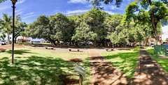 Banyan Tree Pano (Thanks for over 1.5 Million Views!) Tags: maui hawaii lahaina banyantree iphone7 iphone7plus apple