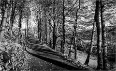 Langdon Beck . (wayman2011) Tags: fujifilmxt10 lightroom wayman2011 bwlandscapes mono trees becks streams roads rural pennines dales teesdale langdonbeck countydurham uk