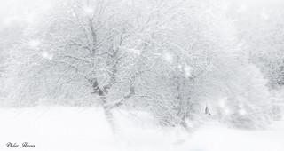 Un vrai hiver !  #winter #snow