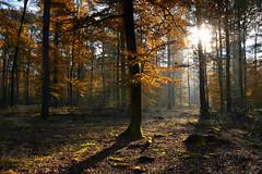 Sous-bois d'automne (Croc'odile67) Tags: nikon d3300 sigma contemporary 18200dcoshsmc fort forest automne