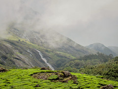 Foggy Day (mohammedali47) Tags: fog foggy munnar aanamudi cold forest nature green