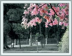 Vegetação (o.dirce) Tags: vegetação jardim árvores folhas coloridas rosa odirce riodejaneiro quintadaboavista