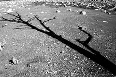 Stony Path (~ Darkscapes ~) Tags: stony path tree shadow weststreetphotography ~darkscapes~ stark bleak dead