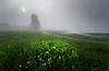 Morning light (marko.erman) Tags: light sun trees silhouette sony morning cerknica slovenia slovenija lake jezero mist misty mood moody landscape