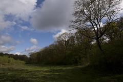 Skindbjerg lund eng (jan kunstmann) Tags: lund skindbjerg naturskov urørtskov skovgræsning