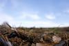 Leftover (Phil Roeder) Tags: rural farm iowa canon15mmf28