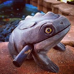 กบเฝ้าบ่อปลาคาร์ฟ #lggflex #Fog #koi