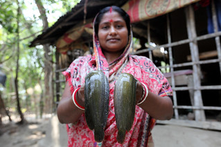 Komola Roy showing fish caught from her pond in Khulna, Bangladesh. Photo by M. Yousuf Tushar.