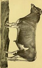 Anglų lietuvių žodynas. Žodis calves' liver reiškia veršelių kepenų lietuviškai.