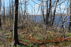 Approaching Isabella Lake via burned portage trail