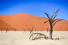 Dead Vlei, Sossusvlei, Namibia (jbdodane) Tags: africa day622 deadvlei desert dry dunes namibnaukluft namibnaukluftpark namibia pan petrified sand sanddunes sesriem sossusvlei tree trunk vlei freewheelycom wondersofnature jbcyclingafrica