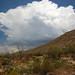 Saguaro_4631