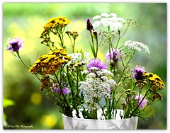 Wiesenblumenstrau (mayflower31) Tags: flowers sommer wiese blumen