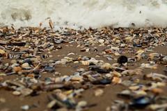 Shells (leonie.vandekamp) Tags: sea shells beach water colors sand flood