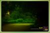 Silent Valley---------------02 (Binoy Marickal) Tags: tourism nature kerala mala palakkad evergreenforest silentvalleynationalpark nilgirihills mannarkkad mukkali kuzhur indiabinoymarickal