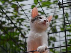 neko (eva101) Tags: brooklyn cat kitten happiness williamsburg muddypaws adoptionevent adoptsheltercat adoptdontshop northbrooklyncats